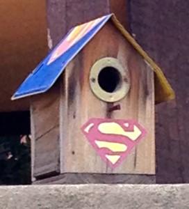 super-bird